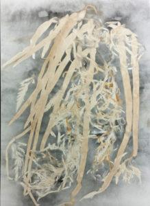 Susan Hall--seaweed web